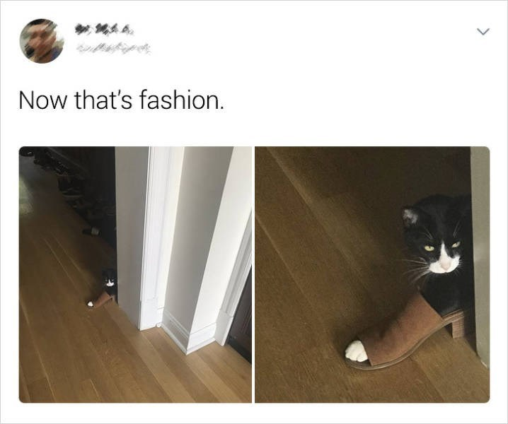 Cat - Now that's fashion.