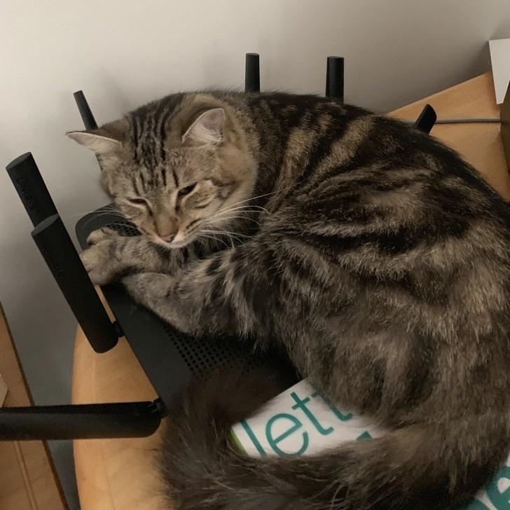 Cat - et