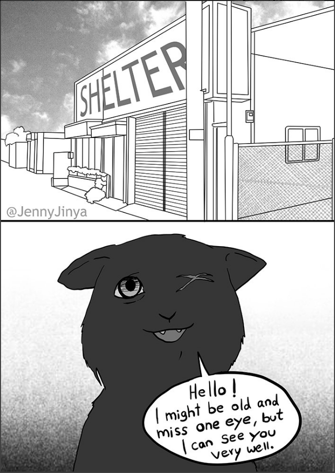 Cartoon - SHELTER @JennyJinya Hello! might be old and miss one eye, but can See yOu very well.