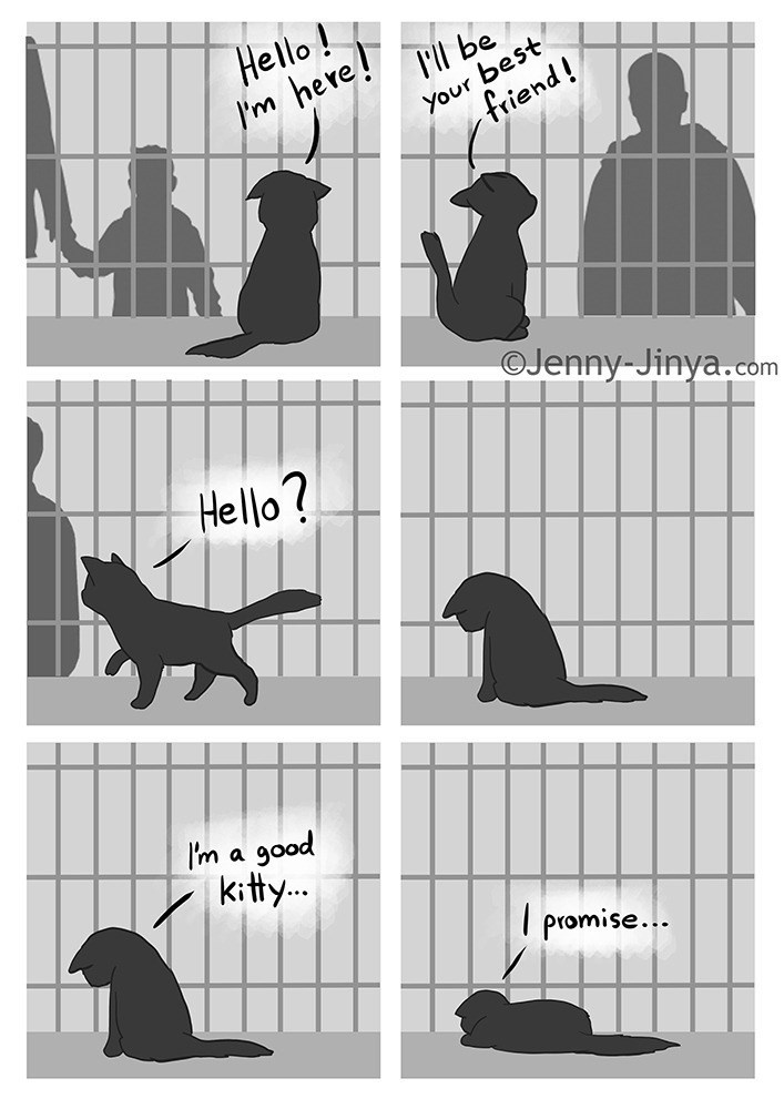 Parallel - Hello! Im here! 'il be your best friend! OJenny-Jinya.com Hello? I'm a good kitty.. I promise...