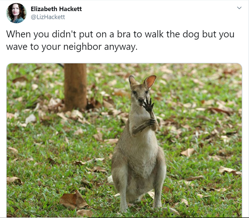 Wallaby - Elizabeth Hackett @LizHackett When you didn't put on a bra to walk the dog but you wave to your neighbor anyway.