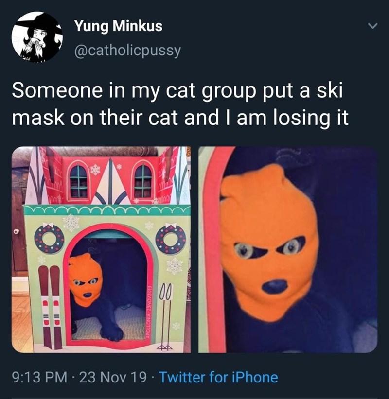 tweets funny tweets Cats funny - 9396939008