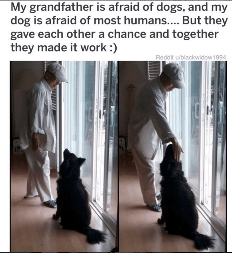 Canidae - My grandfather is afraid of dogs, and my dog is afraid of most humans.... But they gave each other a chance and together they made it work :) Reddit u/blackwidow1 994