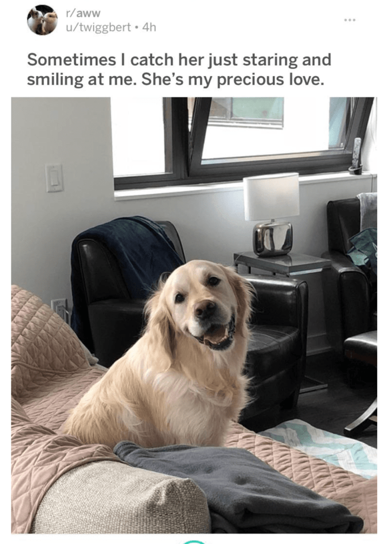 Dog - r/aww u/twiggbert 4h Sometimes I catch her just staring and smiling at me. She's my precious love.