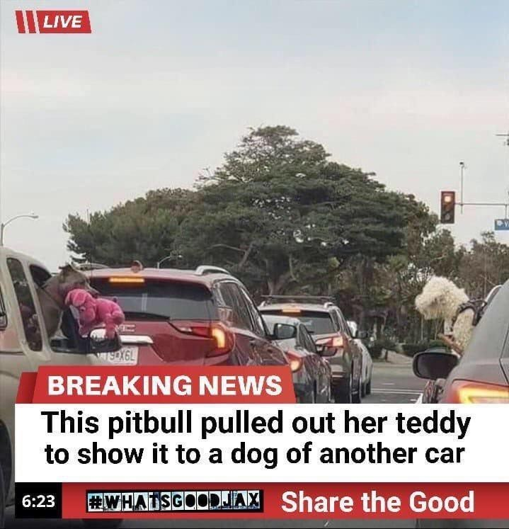 Motor vehicle - LIVE wsoX6L BREAKING NEWS This pitbull pulled out her teddy to show it to a dog of another car WHATSGOODJA Share the Good 6:23
