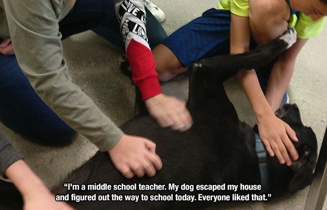 """Arm - VE """"I'm a middle school teacher. My dog escaped my house and figured out the way to school today. Everyone liked that."""""""