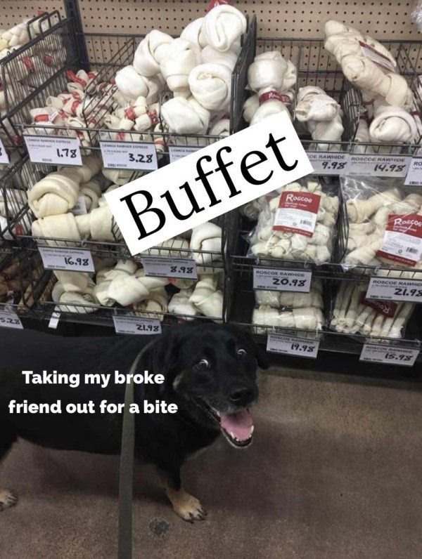 Companion dog - 1.78 3.28 OE RAWHDE ROSCOERAWHDE 9.98 RO 14.98 Roacoo Buffet Roscos I6.98 ROSCOE RAW DE Z0.98 ROSCOE RAWHIDM 21.98 Z1.93 4.98 esco AN n I5.98 Taking my broke friend out for a bite