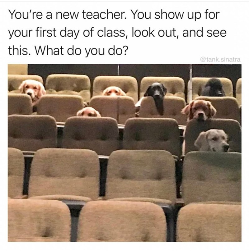 Adaptation - You're a new teacher. You show up for first day of class, look out, and see this. What do you do? your @tank.sinatra