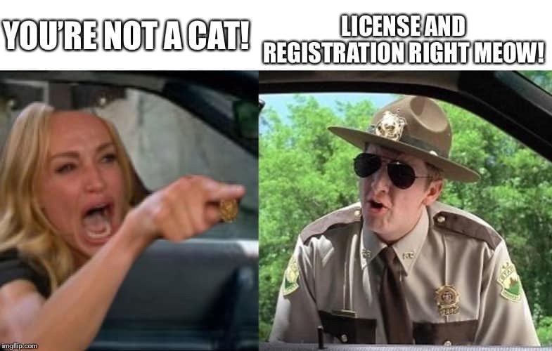 meme - Eyewear - LICENSEAND REGISTRATION RIGHT MEOW! YOURE NOTA CAT! imgflip.com