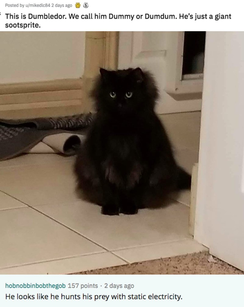 Cat - 3 Posted by u/mikedlc84 2 days ago This is Dumbledor. We call him Dummy or Dumdum. He's just a giant sootsprite. hobnobbinbobthegob 157 points 2 days ago He looks like he hunts his prey with static electricity.