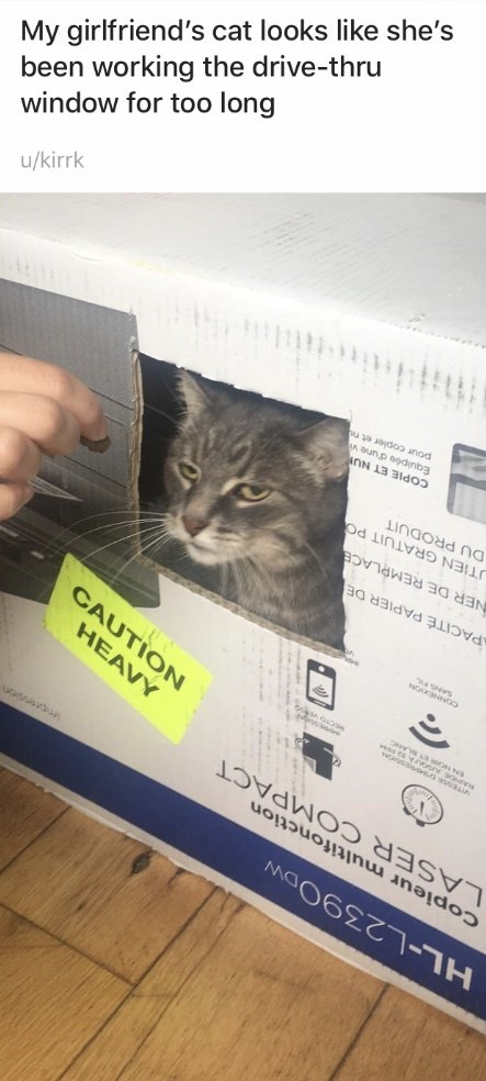 Cat - HL-L239ODW Copieur multifonction LASER COMPACT HEAVY CAUTION s CONNE PACITÉ PAPIER DE TIEN GRATUIT PO DU PRODUIT NER DE REMPLACE COPIE ET NU Equipée d'une vi pour copler et nu /kirrk window for too long been working the drive-thru My girlfriend's cat looks like she's