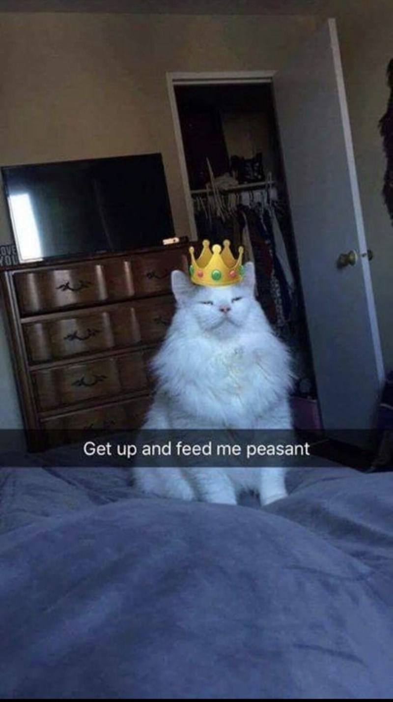 Cat - OVE Get up and feed me peasant