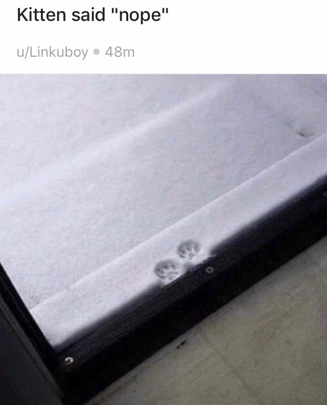 "Floor - Kitten said ""nope"" u/Linkuboy 48m"