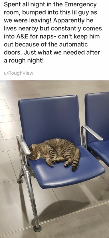Cat - Spent all night in the Emergency room, bumped into this lil guy as we were leaving! Apparently he lives nearby but constantly comes into A&E for naps- can't keep him out because of the automatic doors. Just what we needed after a rough night! u/RoughView