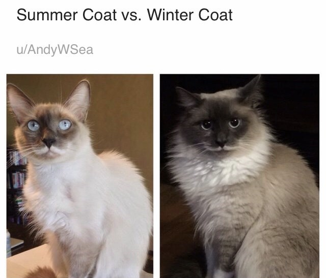 Cat - Summer Coat vs. Winter Coat u/AndyWSea