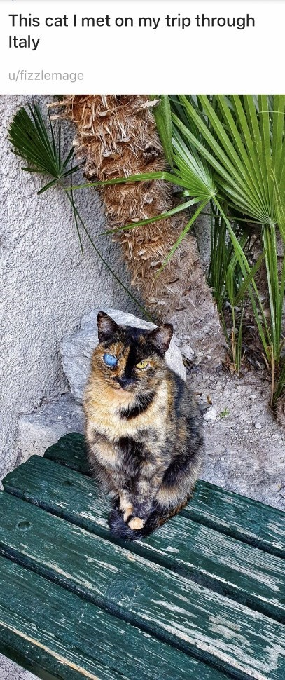 Cat - This cat I met on my trip through Italy u/fizzlemage