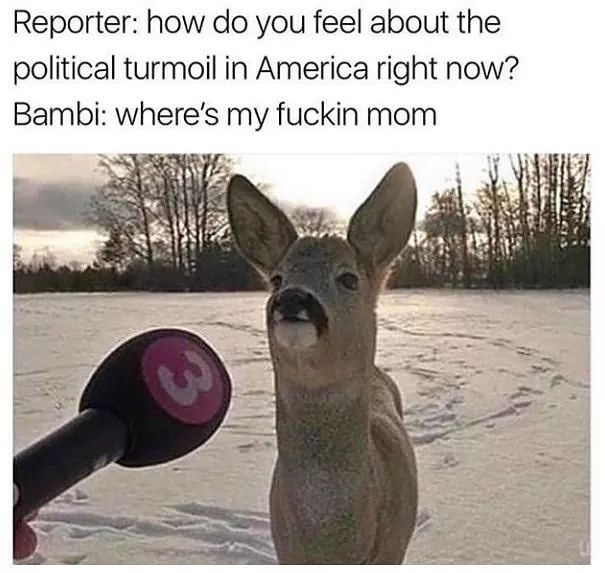 Kangaroo - Reporter: how do you feel about the political turmoil in America right now? Bambi: where's my fuckin mom
