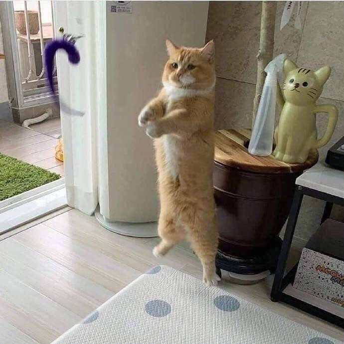 Cat - CACOM