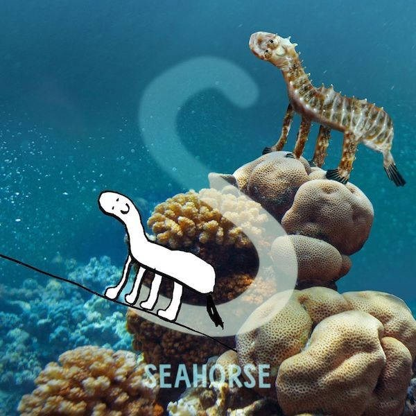 Organism - SEAHORSE