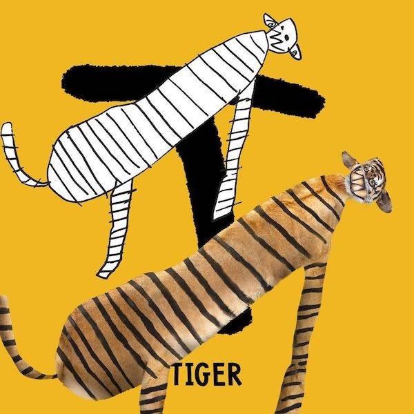Zebra - TIGER