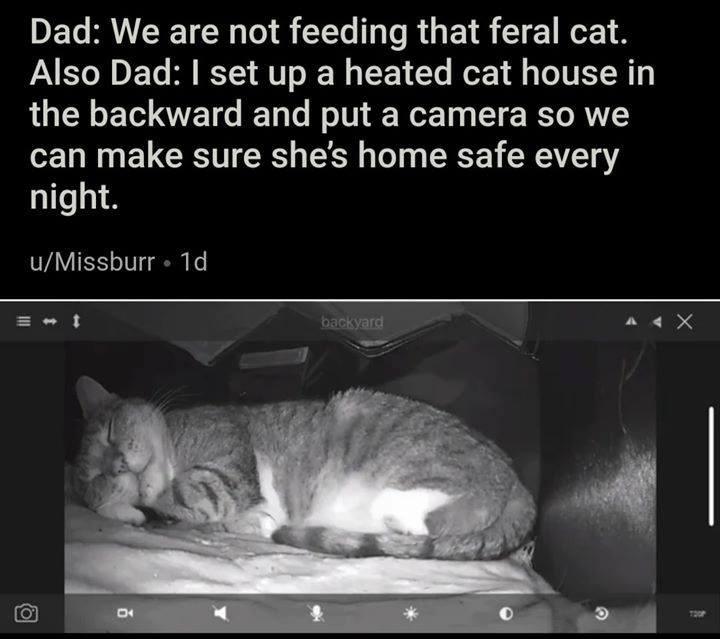 cat memes - 9397749504