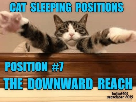 Cat - CAT SLEEPING POSITIONS POSITION #7 THE-DOWNWARD REACH bajio6401 september 2019