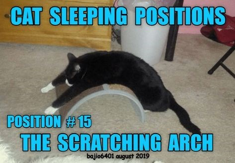 Photo caption - CAT SLEEPING POSITIONS POSITION #15 THE SCRATCHING ARCH bajio6401 august 2019