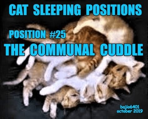 Photo caption - CAT SLEEPING POSITIONS POSITION #25 THE COMMUNAL CUDDLE bajio6401 october 2019