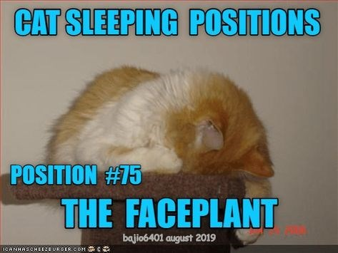 Photo caption - CAT SLEEPING POSITIONS POSITION #15 THE FACEPLANT bajio6401 august 2019 1OANHASCHEEZBURGER:COM