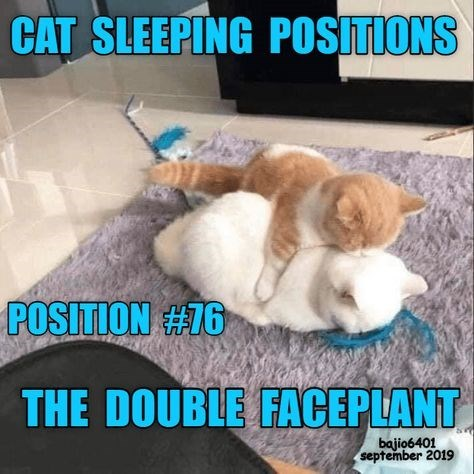 Cat - CAT SLEEPING POSITIONS POSITION #76 THE DOUBLE FACEPLANT bajio6401 september 2019