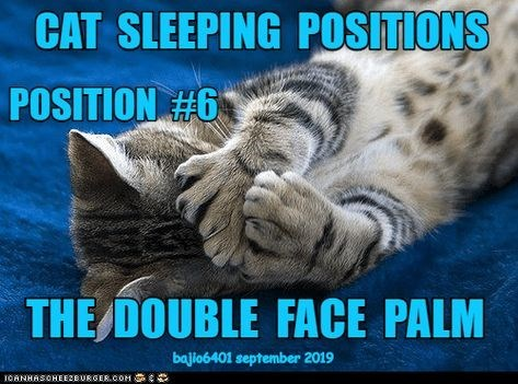 Cat - CAT SLEEPING POSITIONS POSITION #6 THE DOUBLE FACE PALM bajio6401 september 2019 1OANHASCHEEZBURGER.COM G
