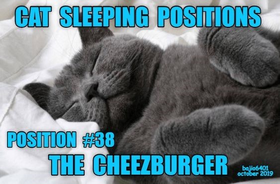 Cat - CAT SLEEPING POSITIONS POSITION #38 THE CHEEZBURGER bajio6401 october 2019