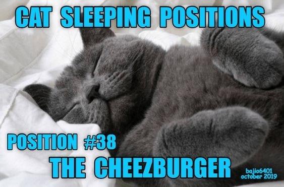 Cat - CAT SLEEPING POSITIONS POSITION #38 THE CHEEZBURGER bajio6401 october 2019