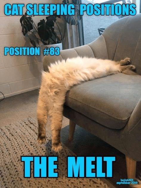 Chair - CAT SLEEPING POSITIONS POSITION #83 THE MELT bajio6401 september 2019