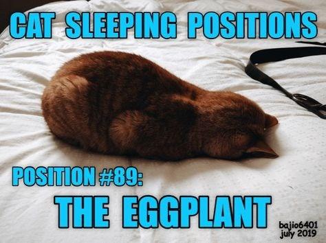 Photo caption - CAT SLEEPING POSITIONS POSITION#89: THE EGGPLANT ING bajio6401 july 2019