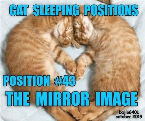Photo caption - CAT SLEEPING POSITIONS POSITION 43 THE MIRROR IMAGE bajio6401 october 2019
