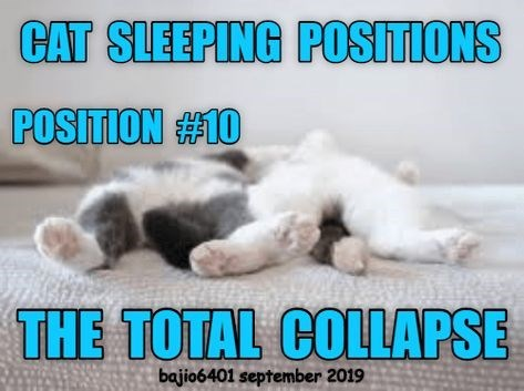 Cat - CAT SLEEPING POSITIONS POSITION #10 THE TOTAL COLLAPSE bajio6401 september 2019