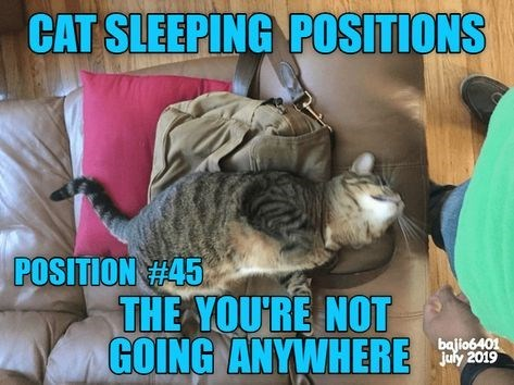 Photo caption - CAT SLEEPING POSITIONS POSITION H45 THE YOU'RE NOT GOING ANYWHERE bajio6401 July 2019
