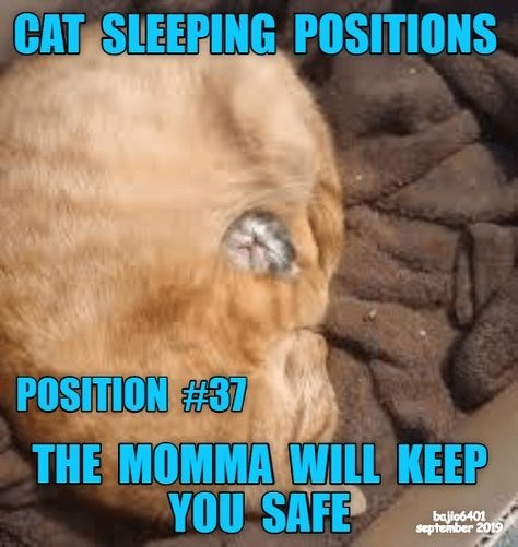 Photo caption - CAT SLEEPING POSITIONS POSITION #37 THE MOMMA WILL KEEP YOU SAFE bajio6401 september 2019