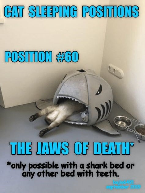 Helmet - CAT SLEEPING POSITIONS POSITION #60 THE JAWS OF DEATH *only possible with a shark bed or any other bed with teeth. aptember2019