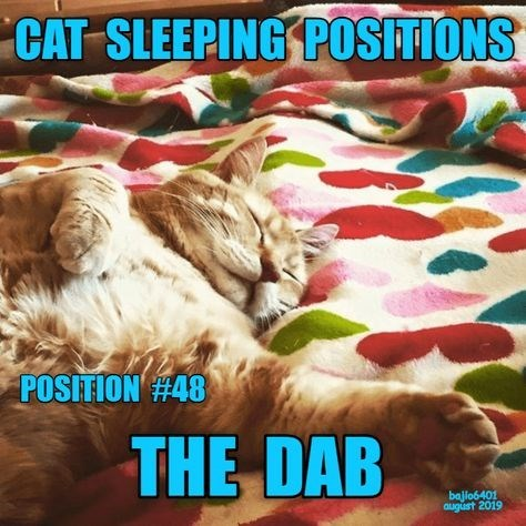 Cat - CAT SLEEPING POSITIONS POSITION #48 THE DAB bajio6401 august 2019
