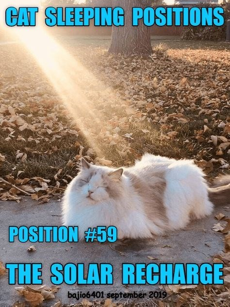 Cat - CAT SLEEPING POSITIONS POSITION #59 THE SOLAR RECHARGE bajio6401 september 2019