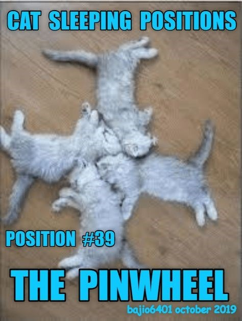 Photo caption - CAT SLEEPING POSITIONS POSITION #39 THE PINWHEEL bajio6401 october 2019