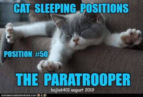 Cat - CAT SLEEPING POSITIONS POSITION #50 THE PARATROOPER bajio6401 august 2019 ICANHASCHEEZBURGER.COM