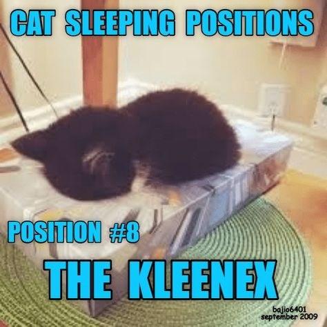 Photo caption - CAT SLEEPING POSITIONS POSITION #8 THE KLEENEX bajio6401 september 2009