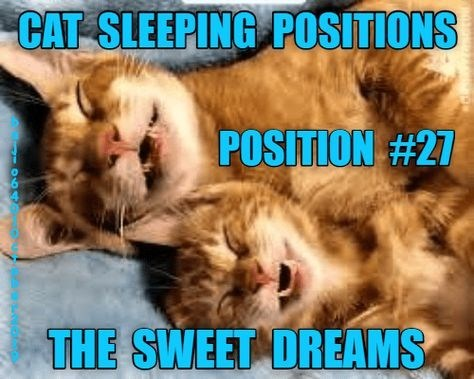 Cat - CAT SLEEPING POSITIONS POSITION #27 THE SWEET DREAMS