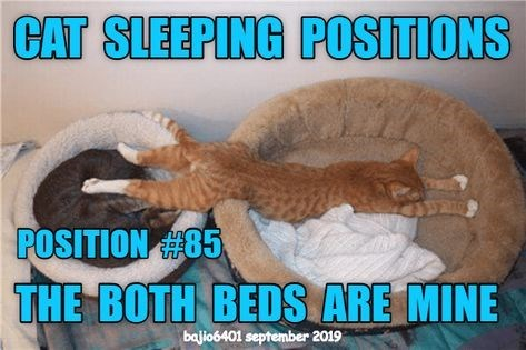 Photo caption - CAT SLEEPING POSITIONS POSITION 85 THE BOTH BEDS ARE MINE bajio6401 september 2019