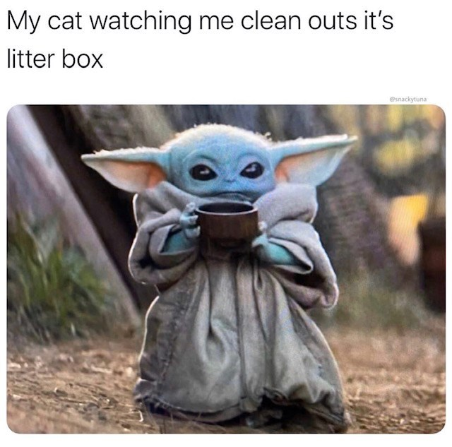 Yoda - My cat watching me clean outs it's itter box @snackytuna