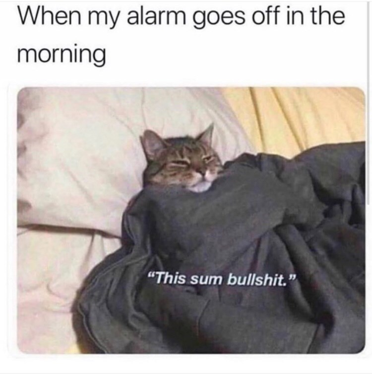 """Cat - When my alarm goes off in the morning """"This sum bullshit."""