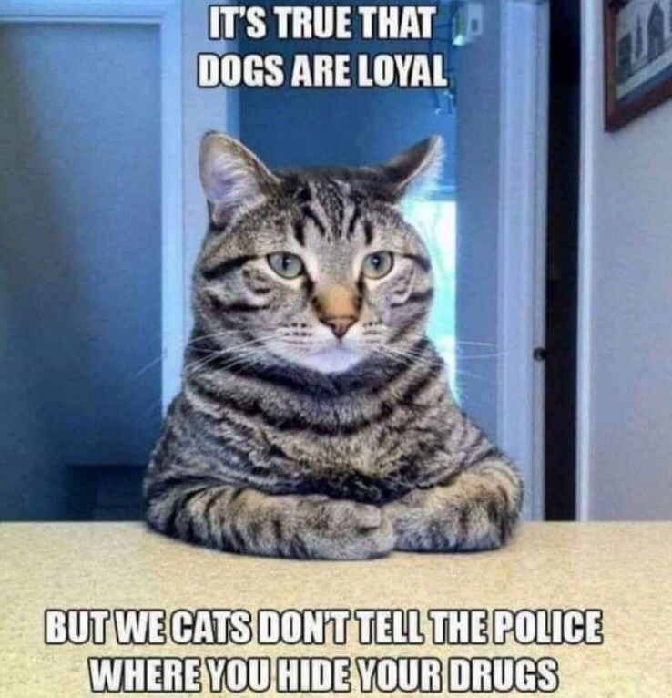 Cat - IT'S TRUE THAT DOGS ARE LOYAL BUT WE CATS DON'TTELL THE POLICE WHERE YOU HIDE YOUR DRUGS